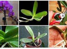 Il nous révèle tous ses secrets pour faire refleurir une orchidée, qui ne fleurissait plus
