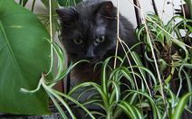 Top 5 Toxic Indoor Plants for Dogs and Cats