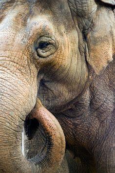 Ban elephant poaching!!!