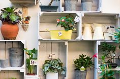 Discover our exclusive guide to living in Kennington area Flower Pots, Flowers, Secret Places, Planter Pots, Flower Vases, Plant Pots, Planters, Royal Icing Flowers, Flower