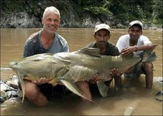 Jeremy Wade, star of River Monsters on Animal Planet, takes us beneath the surface to reveal why he swims against the current to pursue his passion. Jeremy Wade, John Wade, River Monsters, Sea Monsters, Giant Fish, Big Fish, Largest Catfish, Wading River, River Fish