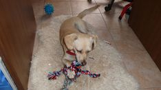 Puppy Chew Toys, Dog Garden, Dog School, Dog Teeth, Medium Dogs, Dog Owners, Rescue Dogs, Dogs And Puppies, Animales