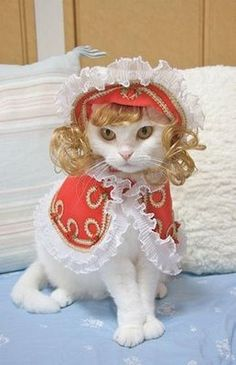 Southern belle cat?!