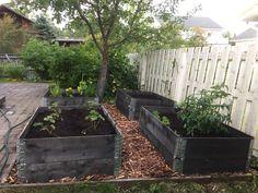 Satoa omista kasvilavoista kätevästi. Uusi keittiötarha, heinäkuu 2019. Garden Design, Planters, Landscape Designs, Plant, Window Boxes, Pot Holders, Flower Planters, Yard Design, Pots