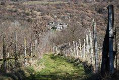 Sentiero tra i campi (arriva la primavera!)   #myValsusa 19-03-16 #fotodelgiorno di Paolo Miletto