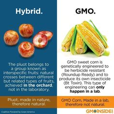 Hybrids are NOT the same as GMOs. The simple difference is one is made in nature with nature and the other was manipulated in a lab. GMOs could never occur in nature! GMOs are currently created by chemical companies and are also reliant on chemicals to grow. A double dose of chemicals is what you've agreed to if you support or ingest GMOs. Get more facts here: www.gmoinside.org/faq Please share this info-graphic! #NoGMOs #GMOs #RightToKnow GMO Inside