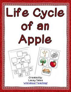 Life Cycle of an Apple {FREEBIE}