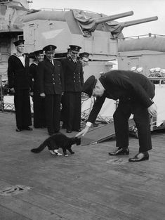 Happy VE Day from Cat Call | Cat Call UK Unsinkable Sam, Hms Prince Of Wales, Reagan Library, Liberation Of Paris, Larry Wilmore, Animal Heros, Series Premiere, Royal Navy, World War Ii