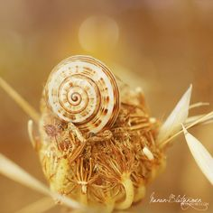 .:Flower's Little Snail:. by Manon-Blutsanguen.deviantart.com on @deviantART