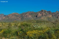 Desert flowers with the Chisos Mountains in the background. Big Bend National Park, Texas. Photography by Tim Speer