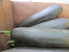 Zucchinis in Season
