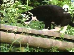 La Vida Secreta de los Gatos (National Geographic)   Documental