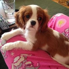 Murphy - mum says i'm growing up too fast, i'm a whole 5.6lbs already! (was 3.6lbs when i was brought home)