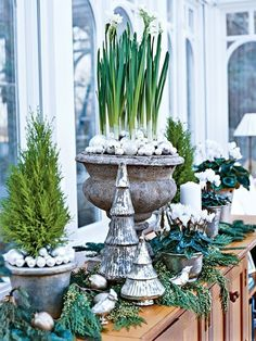 Paper whites in urns with silver ornaments, tiny evergreen tree, cyclamen in silver pots, mercury glass trees, and small silver decorations.