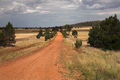 Fletcher's Lane  near Griffith NSW Australia