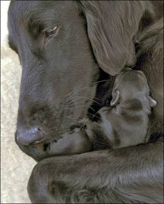 What a Soulful look in the Mothers Eyes
