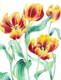 yellow and red tulips 2 | yellow and red tulips watercolour … | Flickr