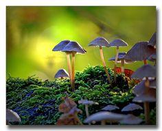 tiwago:    Hersftbeeld… by rinus64 on Flickr.