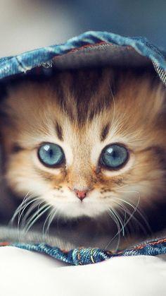 Cute Cat In Jeans pants iPhone 6 wallpaper