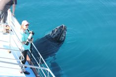 No need for long lenses when whale watching in Hervey Bay. Whale Watching, Wild And Free, Whales, Great Photos, Dolphins, Lenses, Freedom, The Past, Coast