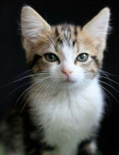 Incredibly cute kitten. What an expression on that face!