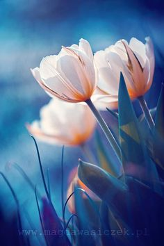 ... by Magda Wasiczek on 500px, blue+peach+pale pink