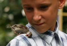 Little boy picked up a sick bird, nurced her to health. She decided to stay with him - an unlikely but cute friendship.
