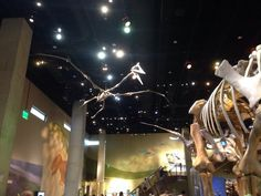 Perot Museum of Nature and Science - Dallas, TX | Yelp