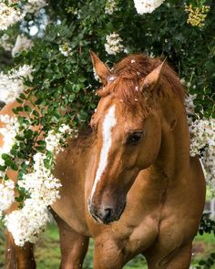 """small-handsxgloves: """" I guess I just really love Sammy and flowers """" Beautiful Soul, Beautiful Horses, Animals Beautiful, Pretty Horses, Animals Of The World, Animals And Pets, Alter Real, Horse Flowers, Lilac Bushes"""