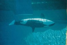 SeaWorld Says Its Orcas Are 'Thriving' In New Ad. Too Bad They're Totally Wrong.