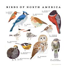 Birds of North America Print Small Adventure is devoted to creating beautifully illustrated artwork that explores nature, traveling and exciting stories. Illustrated in gouache by Keiko Brodeur. Featu