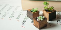 These wooden succulent planters will liven up any dining table. | 21 Ways To Make Your City Home Feel More Outdoorsy