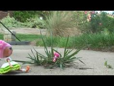 Lalaloopsy: Two Wishes - YouTube