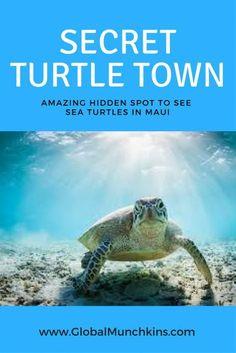 Secret spot to see sea turtles- Turtle Town Maui