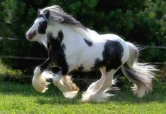horse+background