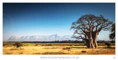 Hoedspruit Kruger National Park, One And Only, Bonsai, South Africa, Places To Go, Landscapes, Canvas Art, Wildlife, Trees