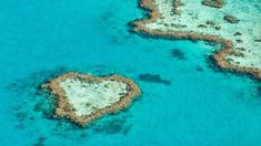 Doğada aşk var! Fotoğraf: Yeni Zelanda