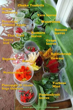 Under-Utilised Food Plants - Permaculture Visions Online Institute