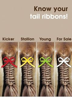 """At my first show, I braided a red ribbon into my horse's mane and tail without knowing...and everyone was asking me questions and avoiding us. I couldn't figure out why because my guy is such a sweetheart. So now I know!"" <<this is very interesting... i'll have to remember this"