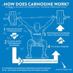 How does carnosine work?