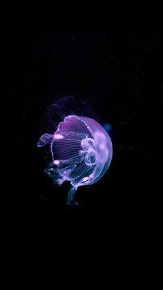 Jellyfish iPhone wallpaper background