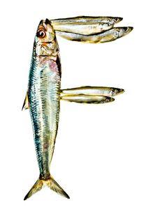"""F"" is for Fish :: Dana Hursey http://www.at-edge.com/commercial-photographer.aspx/DanaHursey"