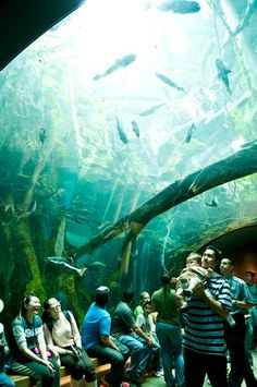 """…then take a glass elevator down to an Amazonian """"flooded forest"""" to walk beneath schools of catfish and arapaima."""