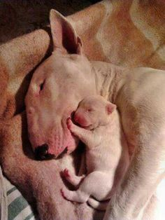 Mom and Baby #Bullies