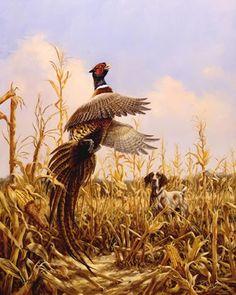 Gallery/Cornfield Pheasant.jpg - Linda Picken