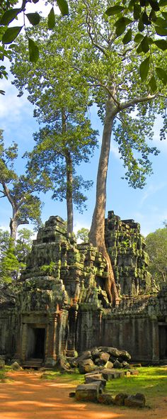 Ta Prohm Temple: http://bbqboy.net/ancient-angkor-and-the-top-10-temples-of-angkor-archaeological-park/ #siemreap #angkor
