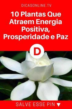 Plantas para energia positiva | 10 Plantas Que Atraem Energia Positiva, Prosperidade e Paz | Qual a sua preferida?
