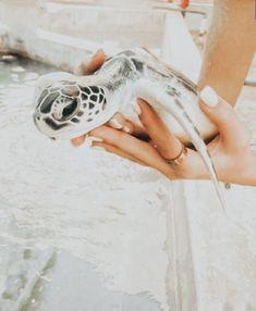 Baby Animals Pictures, Cute Animal Photos, Cute Photos, Cute Pictures, Zoo Photos, Vsco Pictures, Peach Aesthetic, Summer Aesthetic, Cute Little Animals
