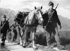 A standard Gebirgsjäger Division would have about 500 of them, along with about 1000 horses and 3000 to 4000 mules. Description from panzergrenadier.net. I searched for this on bing.com/images