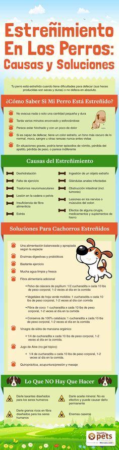 Descubre las causas y soluciones para el estreñimiento canino a través de esta…
